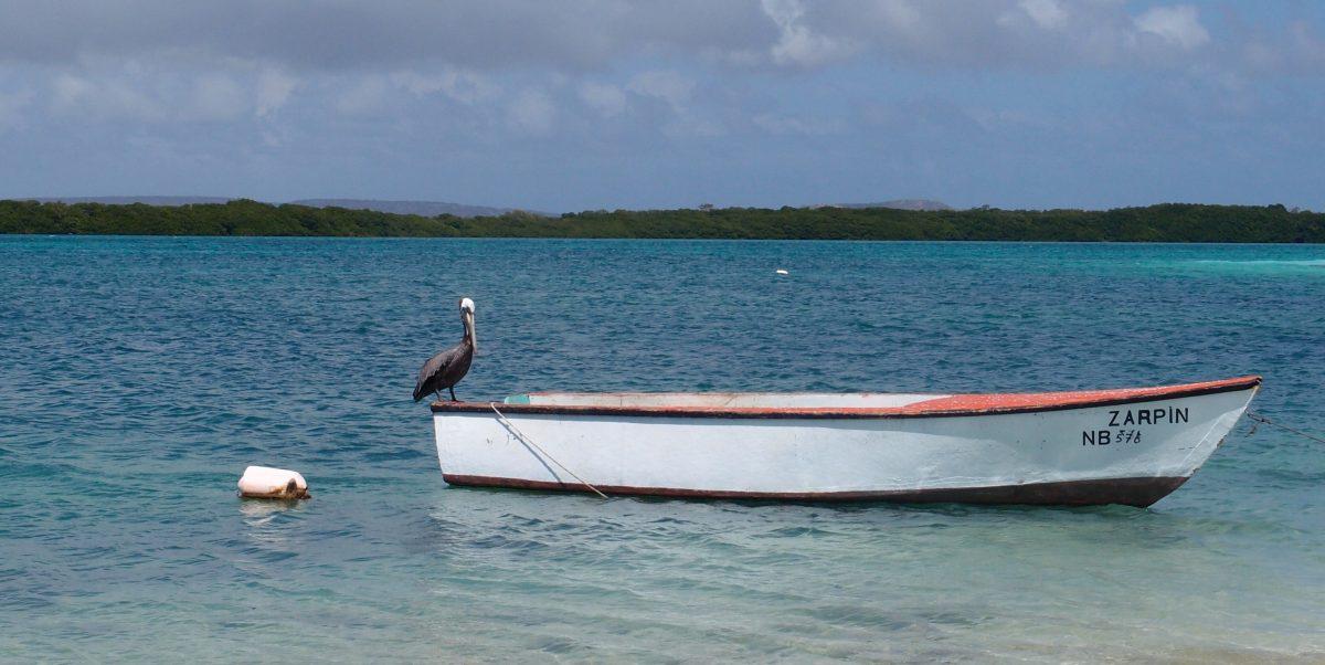 Bootje met pelikaan op Bonaire