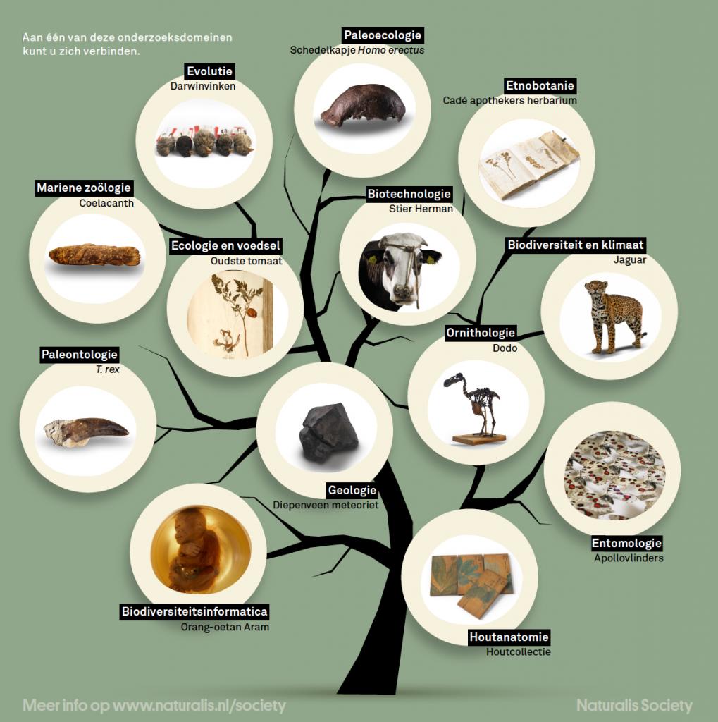 Naturalis Tree of Life Domeinen